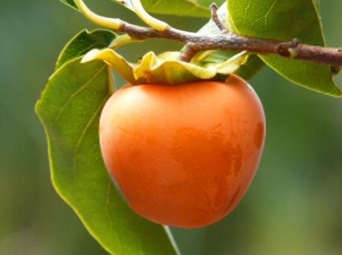 Хурма: состав витаминов и микроэлементов